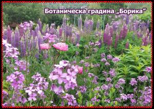 Ботаническа градина Борика