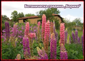 Магнити за хладилник Ботаническа градина Борика